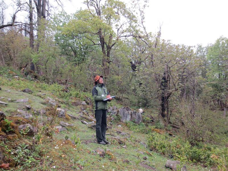 Forest Carbon Inventory