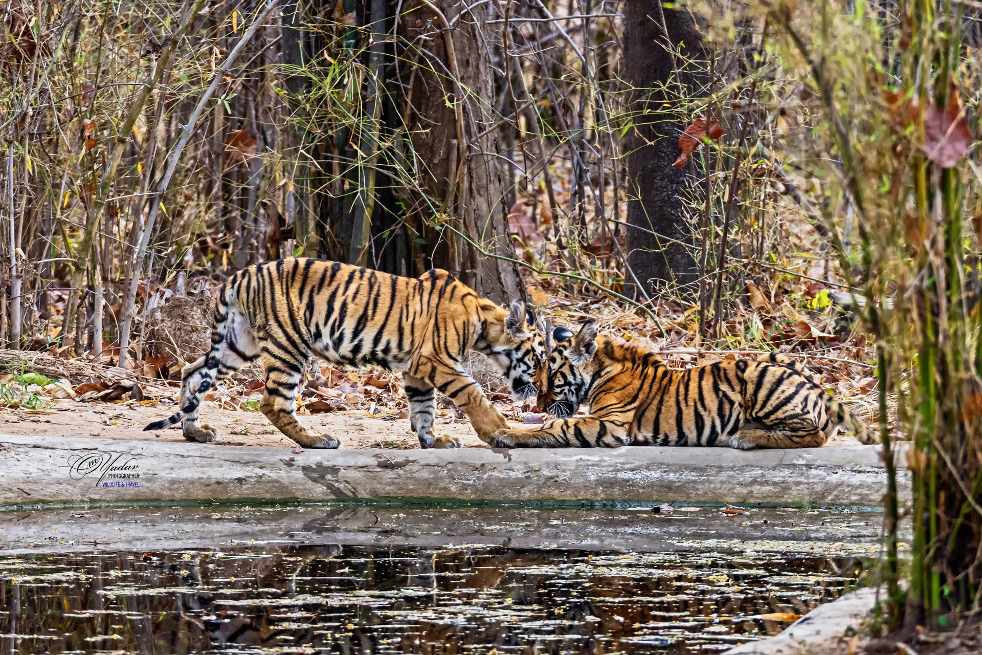 2. Wildlife Crime Control