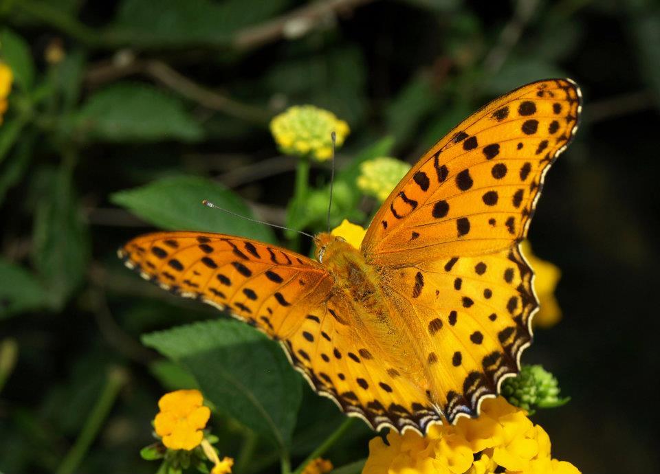 I. Species Conservation