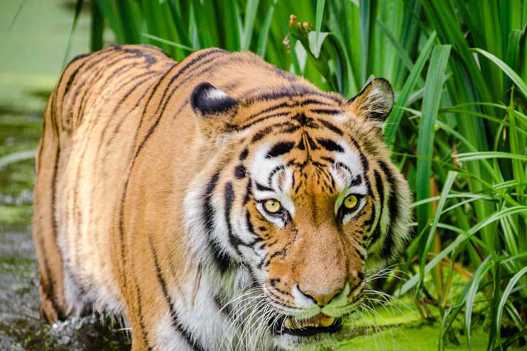 Wildlife Conservation and Research Program
