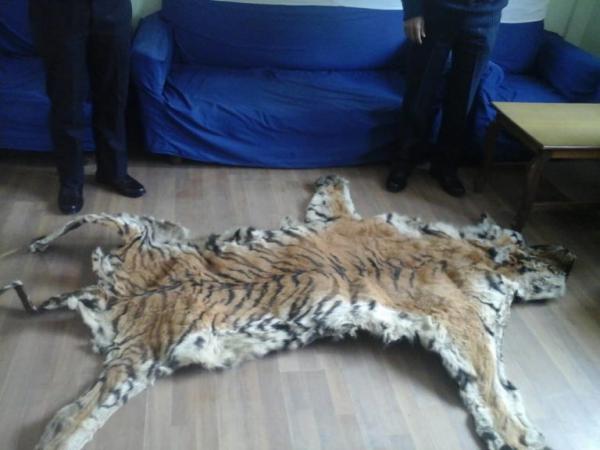 Tiger Skin Seized