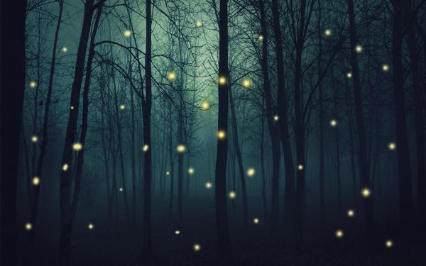 Fireflies, the Forgotten Sparks