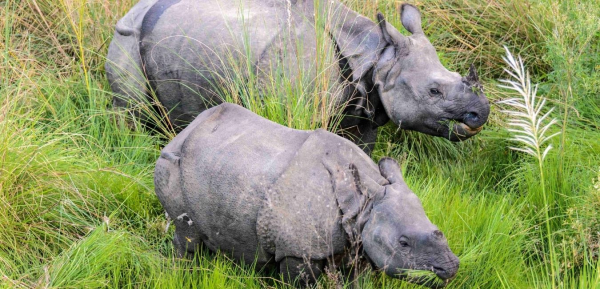 THE GREATER ONE-HORNED RHINOCEROS – A SPECIES PROTECTED IS A HERITAGE MAINTAINED